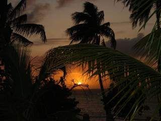 Západ slunce přes palmy